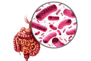 L'importance d'une flore intestinale saine